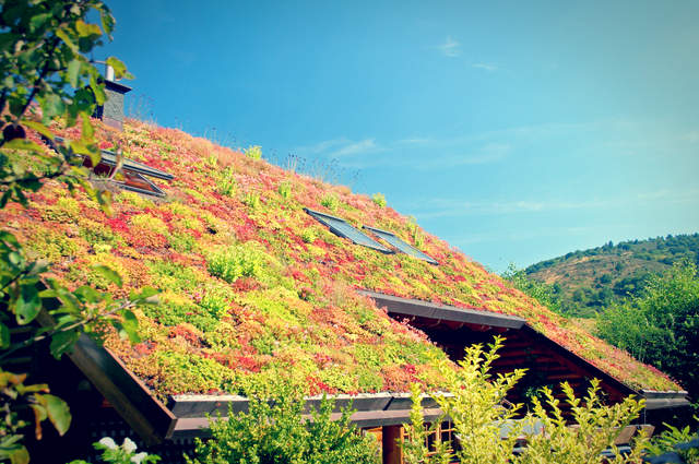 Green Roof. Image by Shutternelke (via Shutterstock).