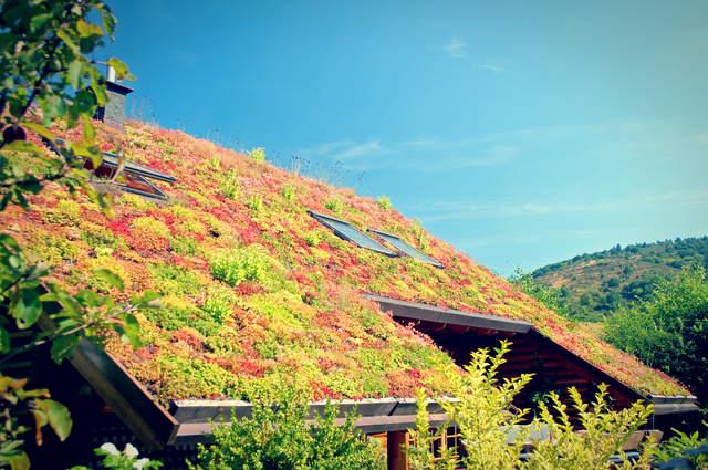 Green Roof. Image by Shutternelke (via Shutterstock).